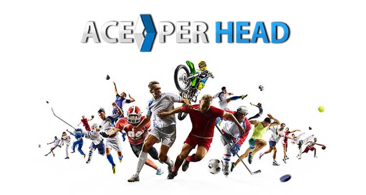 Pay Per Head Business