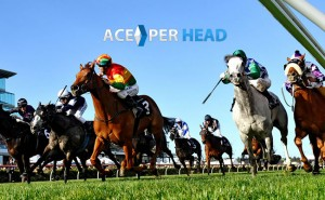Price Per Head Horse Racing