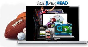 Pay Per Head Website Templates